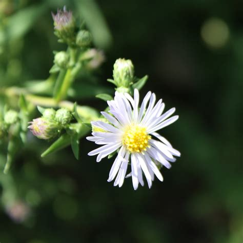 flowers photo tiny white flowers in bloom light light purple flower picture free photograph photos