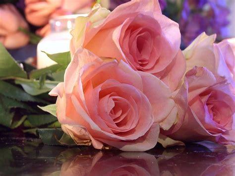 imagenes goticas rosas paisajes de ensue 241 o paisajes rosas