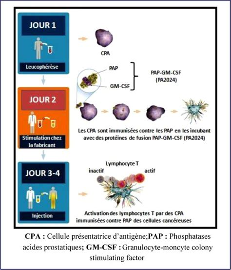 t protein csf urofrance article