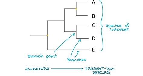 what do trees represent chapter 26 phylogeny and the high school biology phylogenetic tree worksheet high
