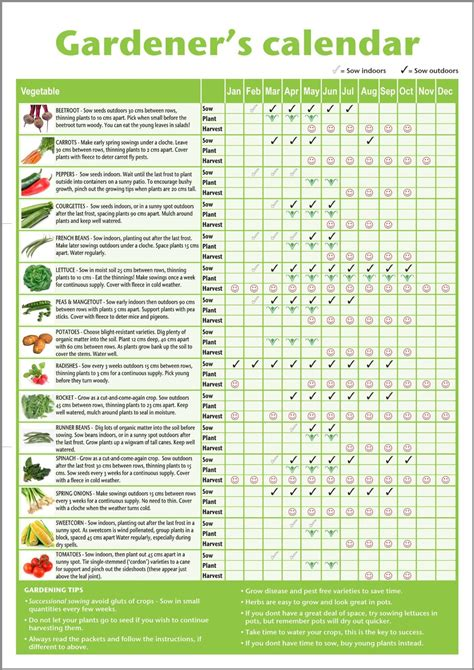 herb planting calendar a3 novice gardener s beginner s vegetable growing