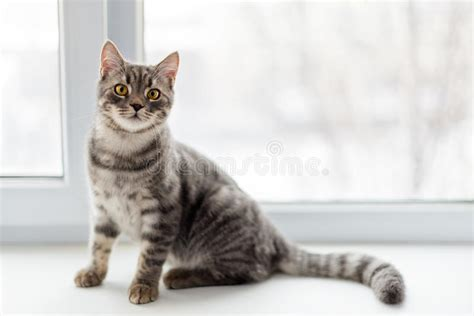 fensterbrett katze faule katze die auf fensterbrett sitzt selektiver fokus