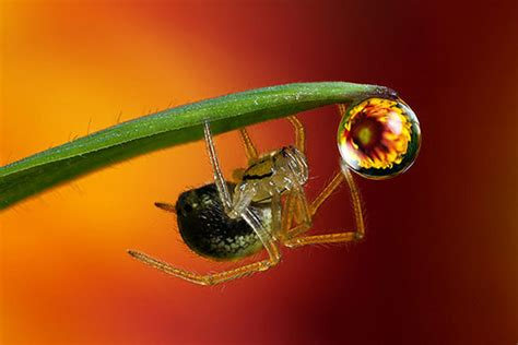 Garden Spider National Geographic Macro Photography Capturing The Unseen World