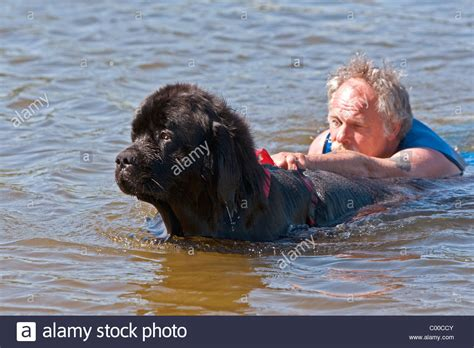 newfoundland puppies rescue harvey where was the consulate support page 3 expats