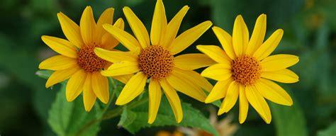 panorama fiori volantino agricola nicese tutto per la florovivaistica l