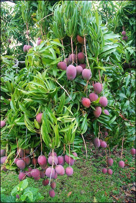 Tree Fruit Picker The Green Head » Home Design 2017
