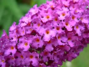 plant with purple flowers file purple flowers 1296 jpg