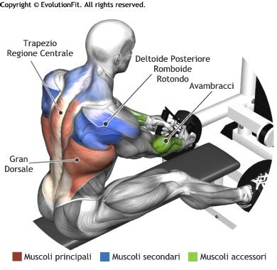 Does Decline Bench Press Work Potenza E Volume Muscolare Contemporanemante Evolutionfit