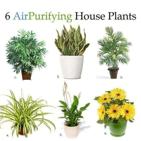 best houseplants for air quality improve the air quality with houseplants home design