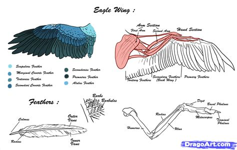 fish body parts diagram fish free engine image for user