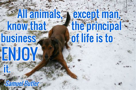 comforting quotes about death of a dog 13 loss of a dog quotes comforting words after losing a