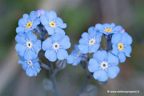 montagna dei fiori montagna dei fiori studio naturalistico lilium
