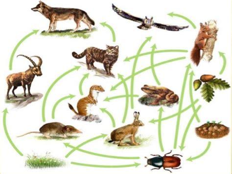 cadenas troficas ecologia ecolog 237 a y medio ambiente cadena tr 211 fica o cadena alimentaria