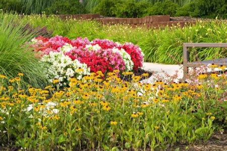 m and m landscaping northern virginia landscaping begonias and black eyed susans