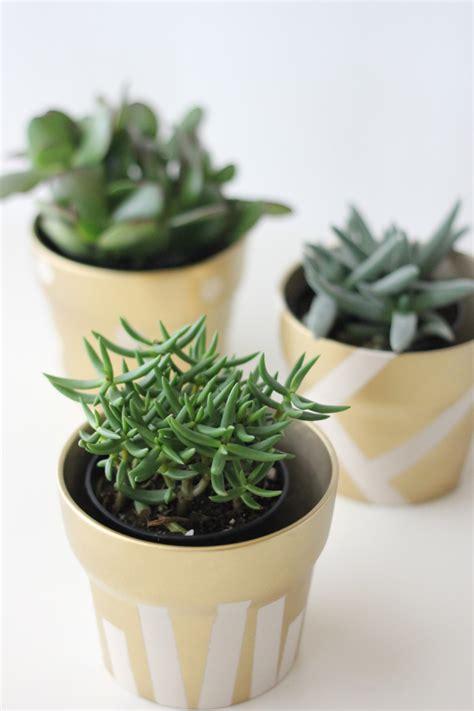 pots for succulents for sale gilded succulent pots