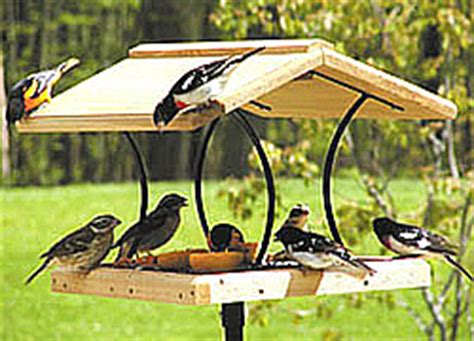 feeding backyard birds wild bird feeder and accessory store