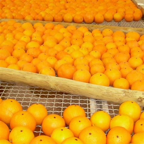 fruit quality environmental chemistry glp services syntech research