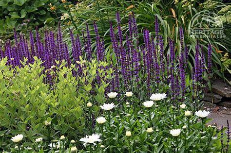 top  perennials   st century perennial gardening