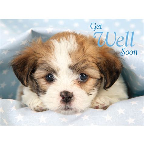 feel better puppy imgs for gt get better soon greetings get well