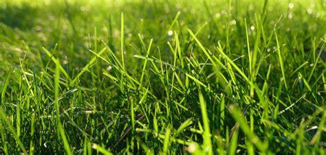 Der Perfekte Rasen ein perfekter rasen so einfach ist er m 246 glich