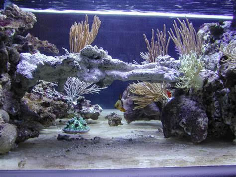 aquascaping tips anyone reef central community