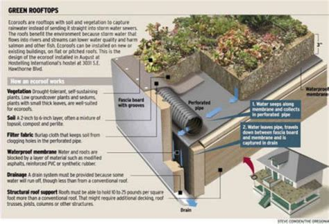 design guidelines for green roofs archives a view from the sky trenches