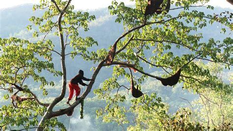 Madu Hutan Baduy Asli maduhutan membedakan madu hutan asli teliti sebelum membeli