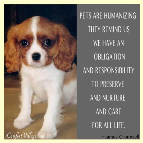 pet technologies on twitter thanks for joining us braubeviale it pets quotes quotesgram