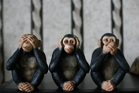 three wise monkeys see no evil hear no evil speak no e