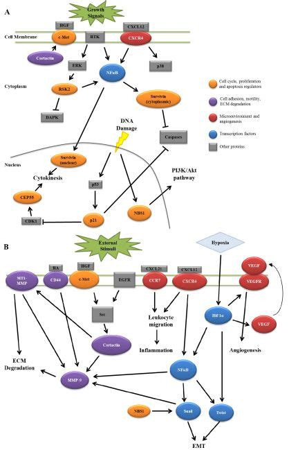 cancers  full text  identified biomarkers