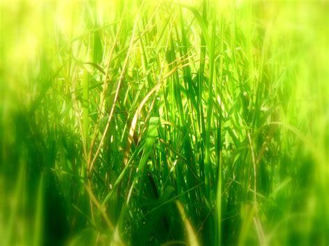 wallpaper abstract grass wallpapers tall grass wallpapers