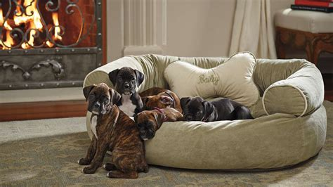 how are dogs for sofa bed large furniture pet the most comfortable sofas thesofa