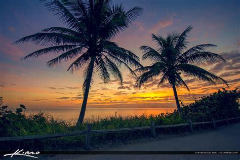 with palm tree island palm tree at jupiter island florida royal