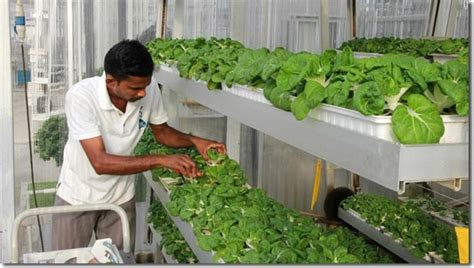 Tanaman Gantung Green Happy vertical farming singapore s solution to feed the local