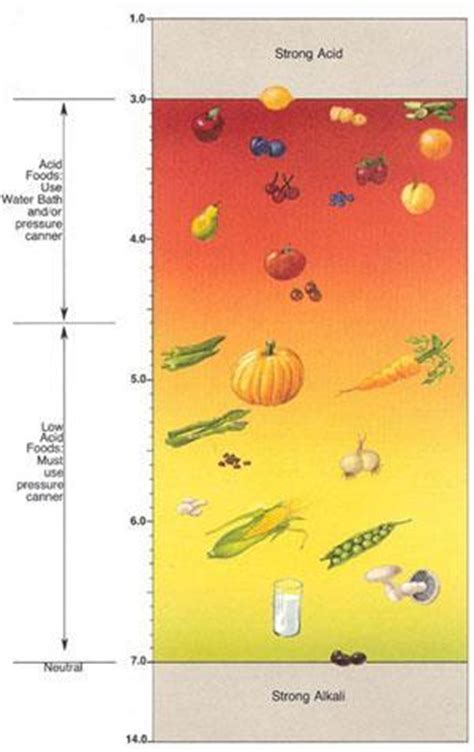 digestione alimenti cibi a digestione acida o basica nelle diete dissociate