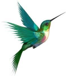 stunning color hummingbird tattoo idea cute tattoo