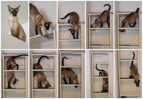 convert a cheap bookcase into a small footprint cat tree