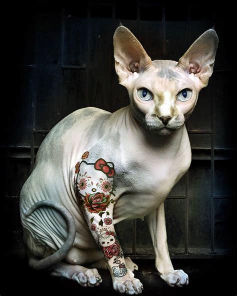 tattooed hairless cat tattooed hello cat ideas cats
