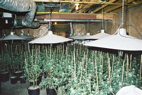 grow op house grow op house 28 images ommpgrower 20k marijuana grow op gangsters out grow op in
