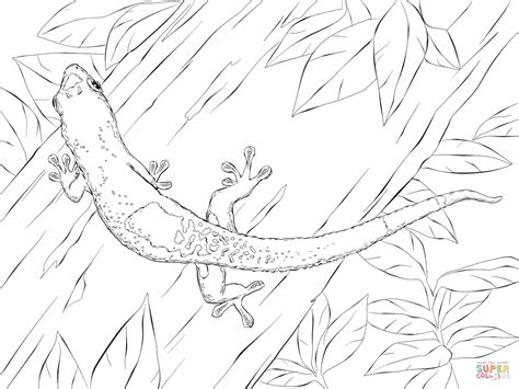 Madagascar Day Gecko Coloring Page Free Printable Gecko Coloring Pages