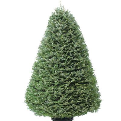 home depot live christmas tree types of real trees the home depot