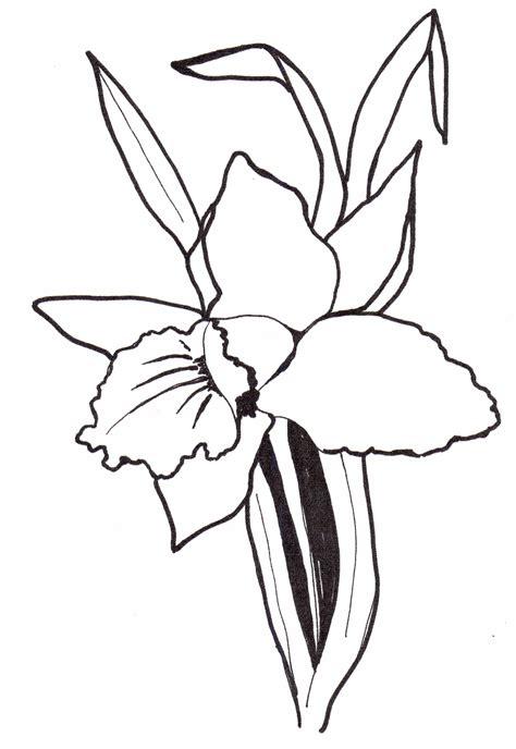 ausmalbilder malvorlagen von orchideen kostenlos zum