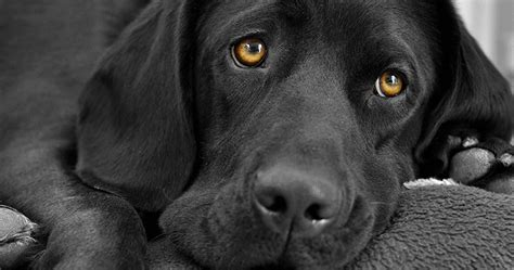 black names puppies black names complete a to z list