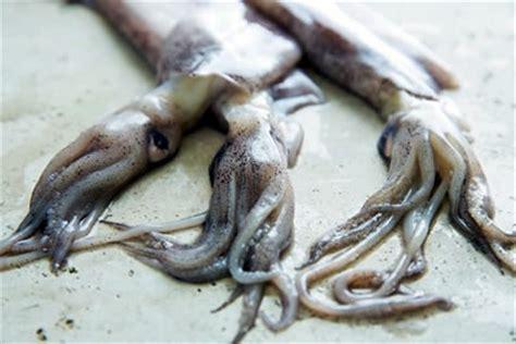 imagenes de animales moluscos caracter 237 sticas de los moluscos