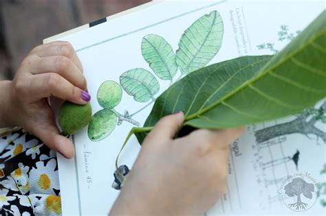 inventario ilustrado de los 193 rboles y los insectos libros montessori friendly creciendo