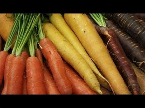 the carrot purple and other curious stories of the food we eat rowman littlefield studies in food and gastronomy books growing carrots yellow purple orange