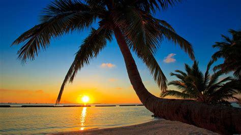 strand hängematte die 66 besten hintergrundbilder mit der natur dem sommer