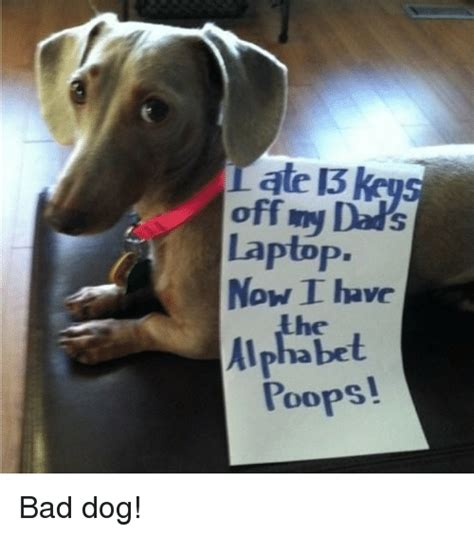 Bad Dog Meme - 25 best memes about bad dog bad dog memes