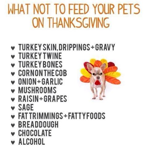 can you give dogs turkey every s rescue