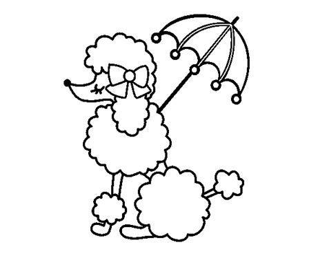 poodle with sunshade coloring page